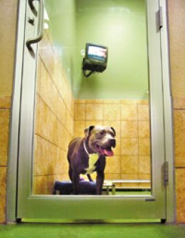 Five star luxury for dogs for Five star dog resort